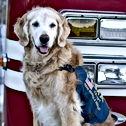 brave 9/11 rescue dog