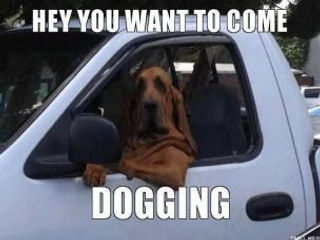 hey you want to come dogging