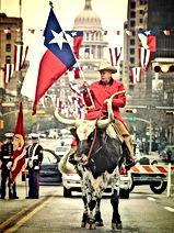 texas long horn cowboy