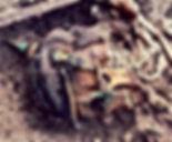 Skull in helmet german soldier ww1