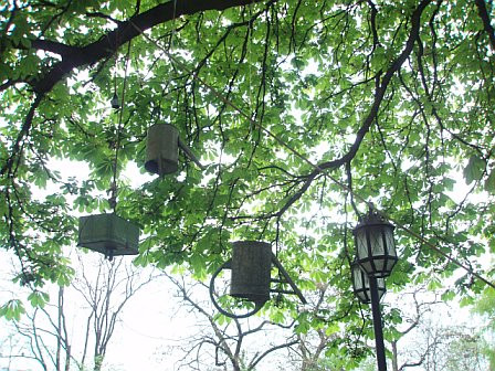 water cans in tree.jpg