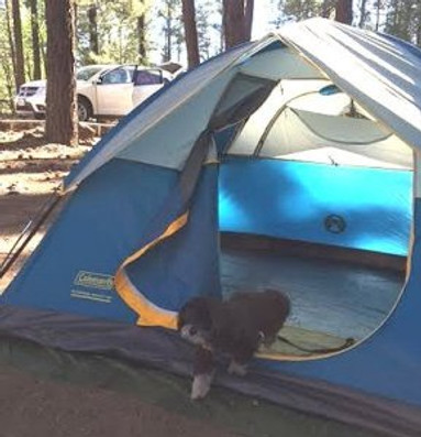 our dog Scooter in tent