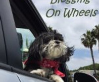 dog on road trip