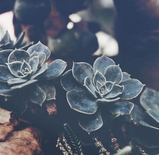Succulents_edited.jpg