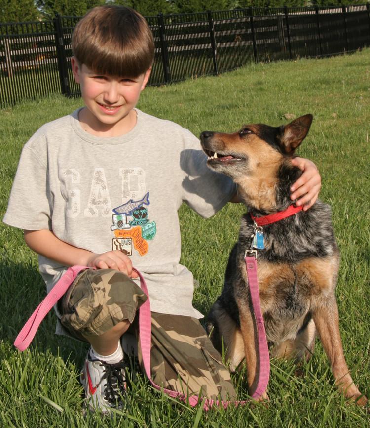 australian cattle dog, teach dog to be good with kids, dog training, Sherman, CT