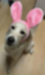 gracie bunny 0318.JPG