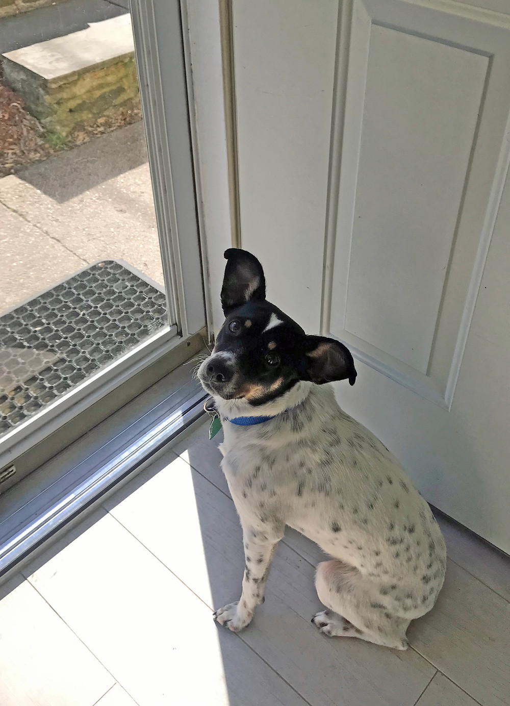 terrier, dog training, my dog escapes and runs away, Brookfield, CT
