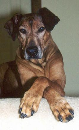 training with rewards, trick training, dog training, New Fairfield, CT