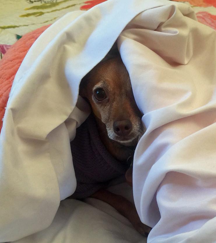 my dog won't listen to me, dog training, puppy training, Pawling, NY