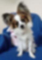 puppy training brookfield CT 2018.jpg