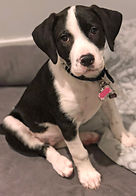 puppy training armonk NY 0219.jpg