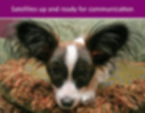 dog training Danbury