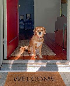 dog waits at open door
