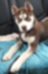 miska reilly pup.JPG