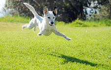 blog flying dog.jpg