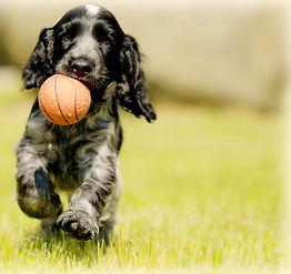 blog pup runs w ball.jpg