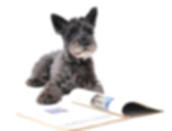 blog scotty pup reads book.jpg