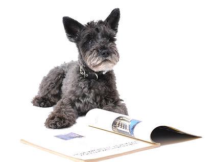 blog scotty pup reads book.jpg