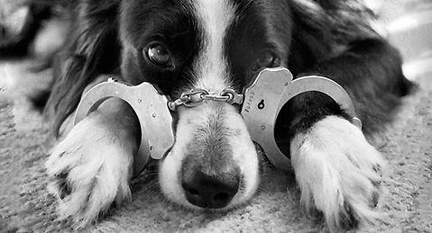 finn_handcuffs B&W.jpg