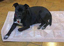 dog training white plains NY 1218.jpg