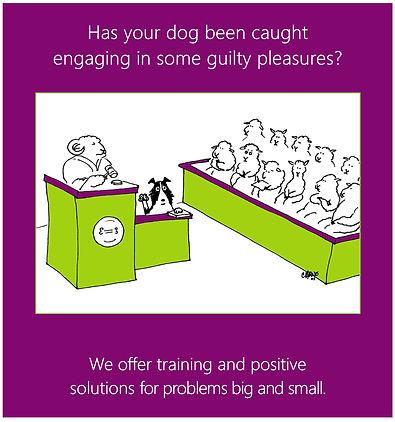 nsc meme dog on trial for web 0818.jpg