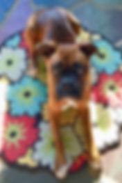 banner boxer caraher crop.jpg