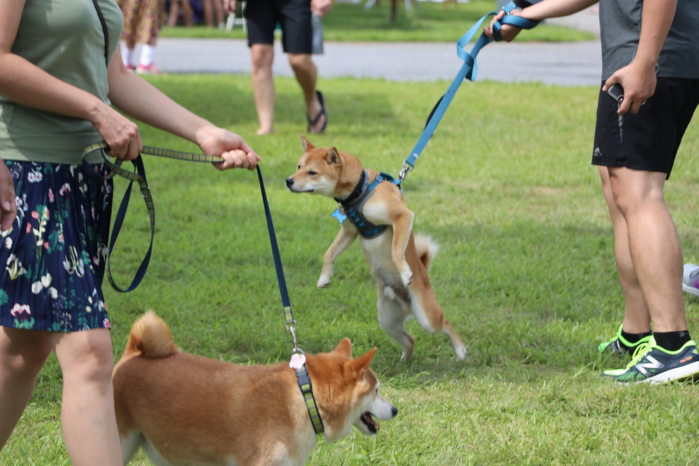dog barks at other dogs, dog lunges at people, dog problems, New Fairfield, CT