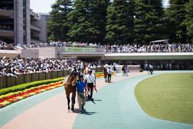 競馬 イメージ