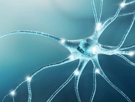 Układ nerwowy, a Twoje zachowanie