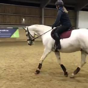 New Production Horse Lippy!