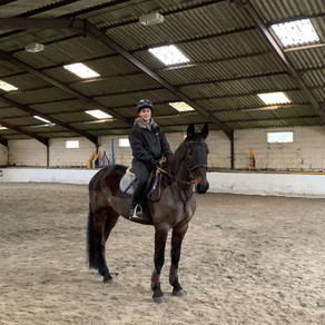 Introducing New Horse Beau!