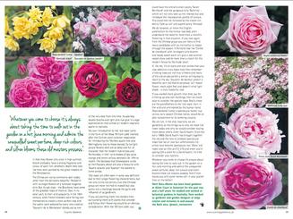 matt-rees-warren-old-roses-country-gardener