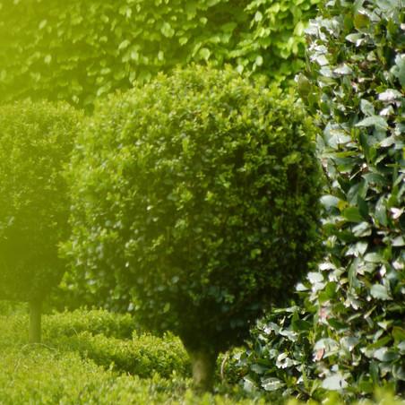 garden-buxus-green.jpg