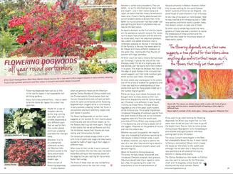 matt-rees-warren-flowering-dogwoods-country-gardener