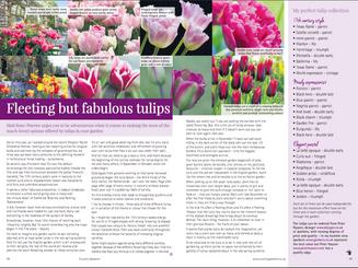 matt-rees-warren-tulip-article-country-gardener.png