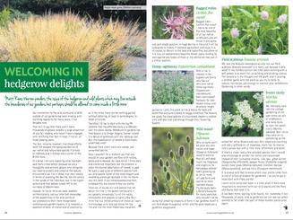 matt-rees-warren-hedgerow-article-country-gardener.png