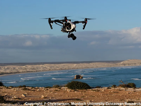 Drone right whale science at Head of Bight