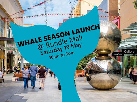 Whale Season Launch 2018