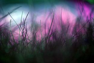 psyca grass.jpg
