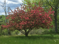 Blossom at Four Winds