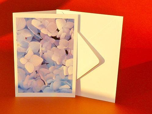 Hydrangea Photo Card