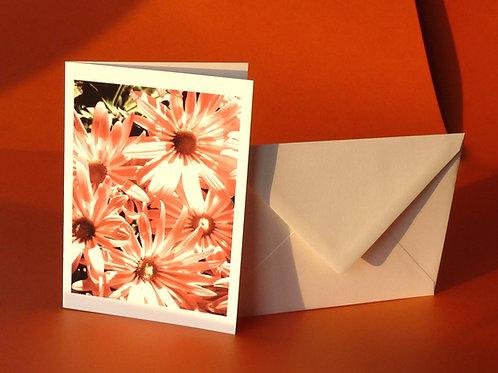 Daisies Photo Card