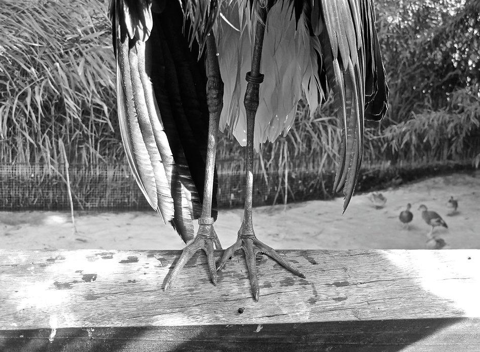 Crane Legs.jpg