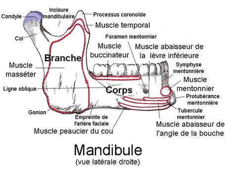 """""""J'ai la mâchoire qui craque"""" : les troubles de l'articulation temporo-mandibulaire"""