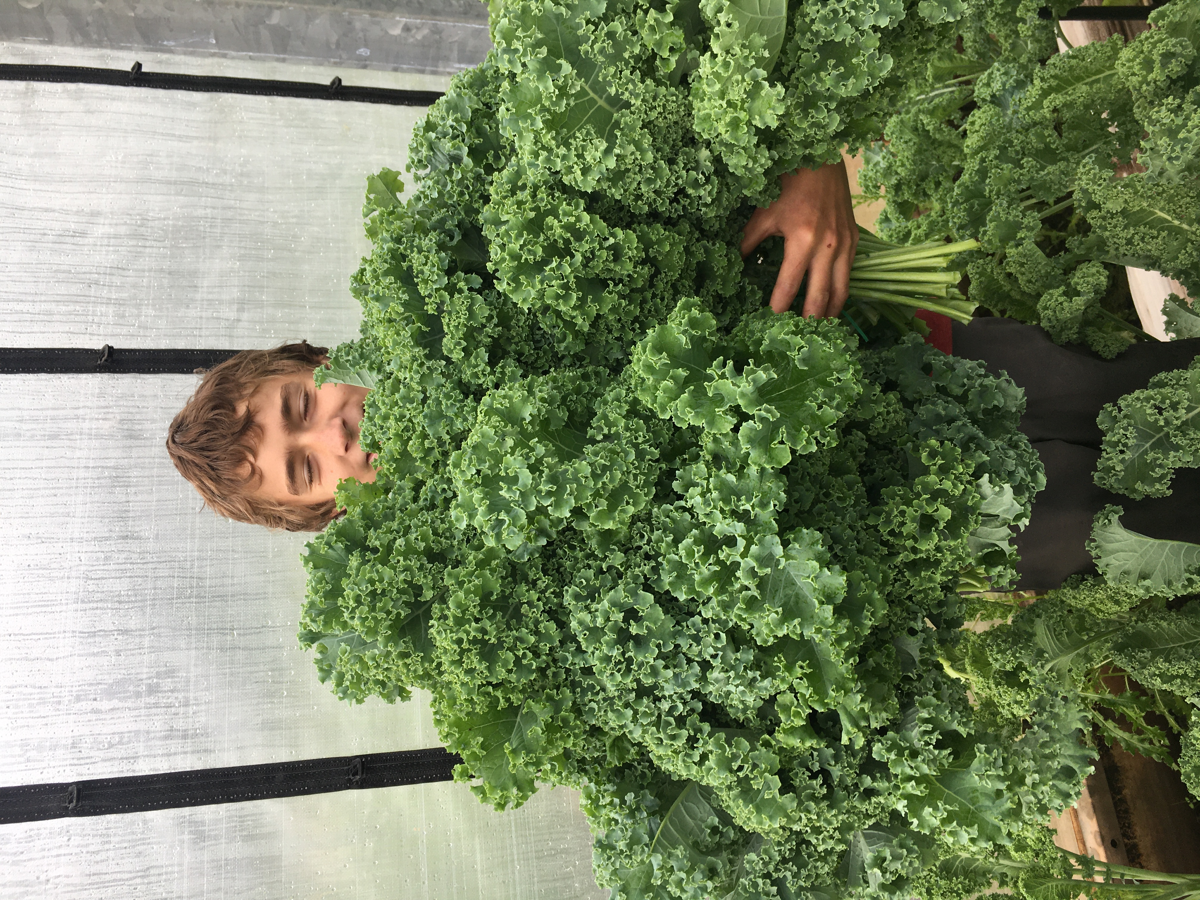 Curly Kale!!