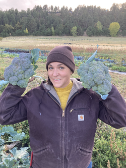 Fall Broccoli Harvest