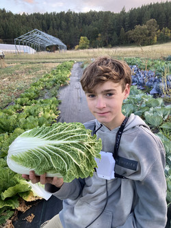 Josiah Harvesting Napa