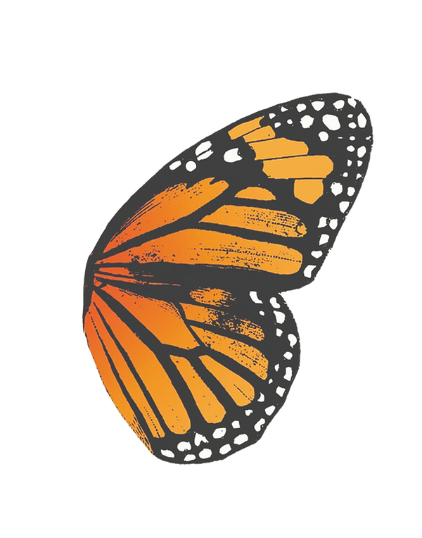 Butterfly%20wing%202_edited.png