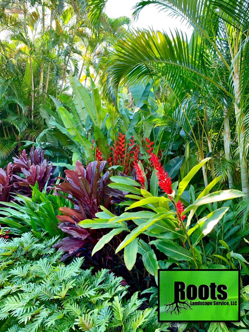 Tropical Backyard Landscaping