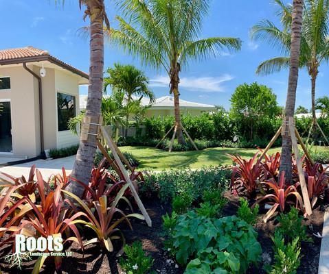 Singer Island Landscape Designer Modern Tropical
